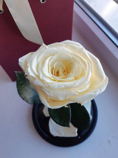 роза под куполом киев купить