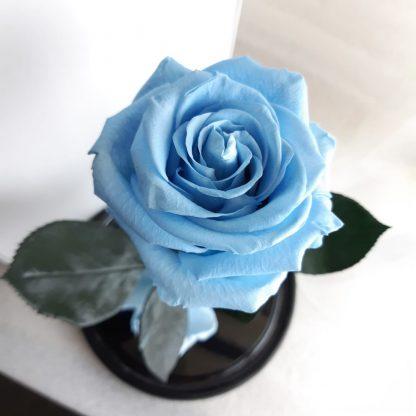блакитна троянда у колбі купити київ