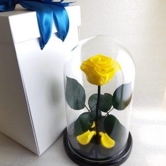 жовта троянда у колбі купити київ