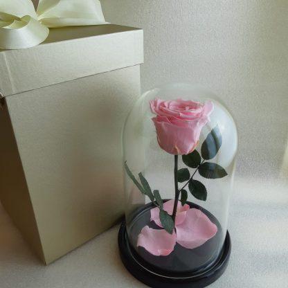 рожева троянда у колбі купити київ