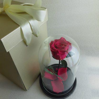 Роза малиновая в колбе купить Киев Украина