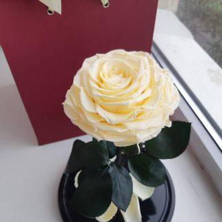 вечная роза купить киев украина