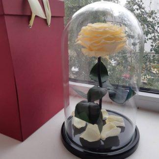 бежевая роза в колбе купить