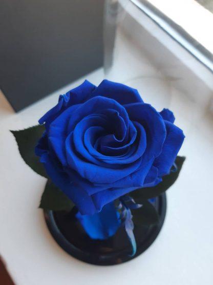 синяя вечная роза в колбе