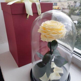 бежевая роза в колбе купить киев украина
