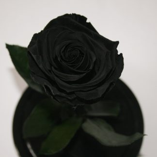 роза колбе купить Киев Украина