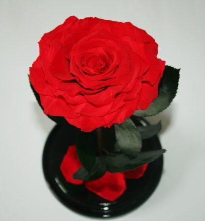 троянда у колбі