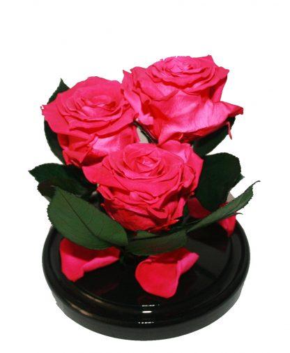 малиновая роза в колбе купить киев