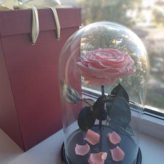 розовая роза в колбе купить