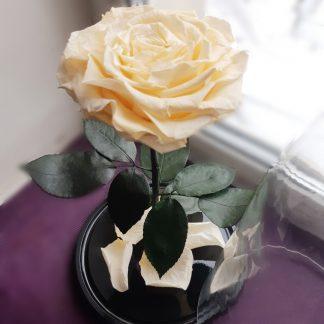 бежевая роза в колбе в подарочной коробке