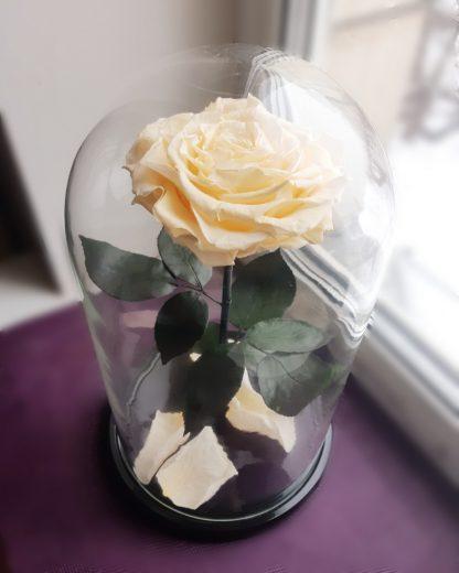 подарок на 14 февраля бежевая вечная роза в колбе