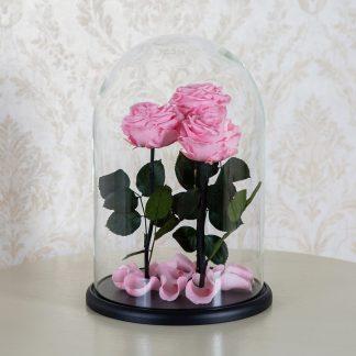 три розы к колбе купить киев