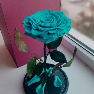бирюзовая роза в колбе купить