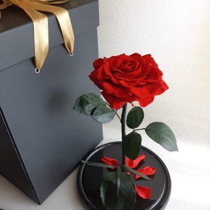 большая красная роза в колбе