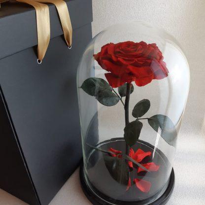 красная роза в колбе купить Roselive