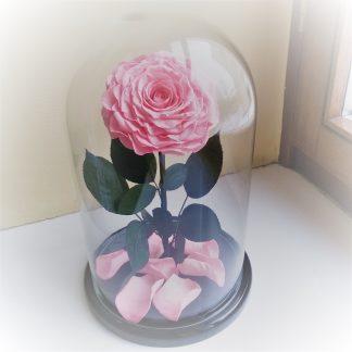 большая розовая роза в колбе купить