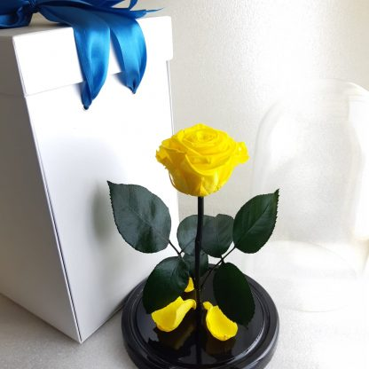желтая роза в колбе купить киев