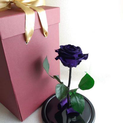 фиолетовая роза в колбе купить киевёё