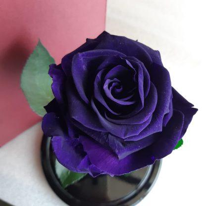 фиолетовая роза в колбе купить киев