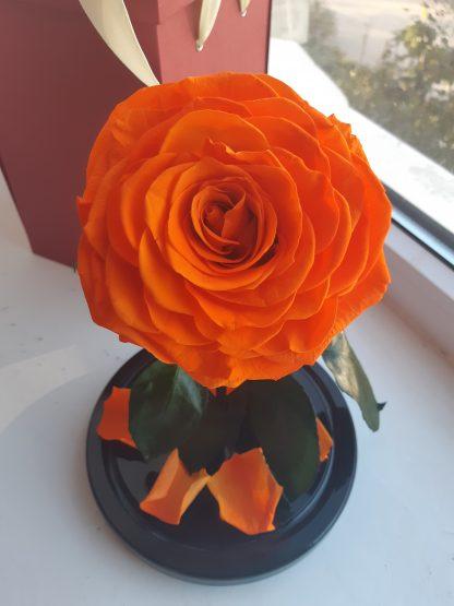 оранжевая роза в колбе купить киев