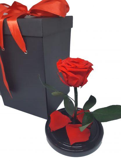 вечная красная роза в колбе
