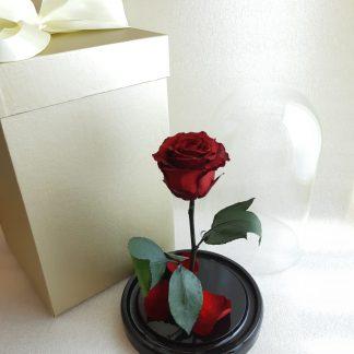 червона троянда у колбі купити київ