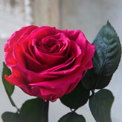 роза в колбе малиновая