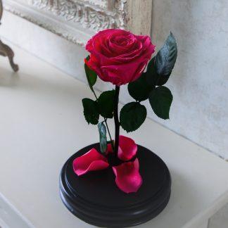 роза в колбе малиновая lux