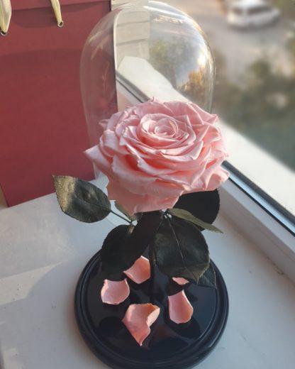 розовая роза в колбе купить киев
