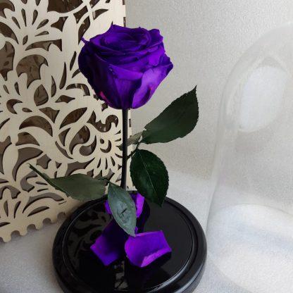 фіолетова троянда в колбі купити київ