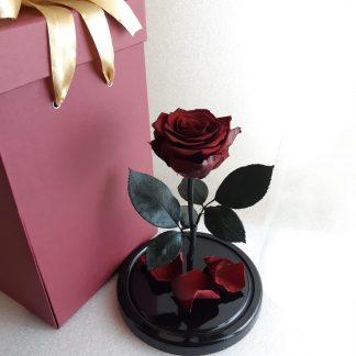 бордовая роза в колбе купить киев