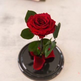 троянда у колбі червона київ
