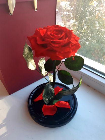 красная роза в колбе купить