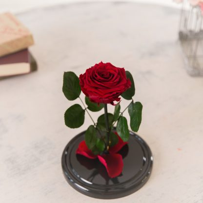 троянда у колбі червона купити
