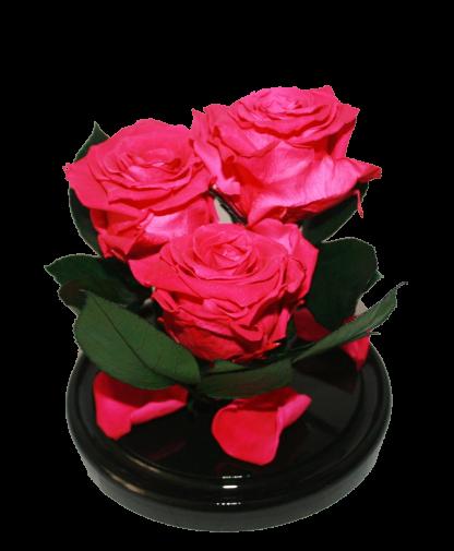 три малиновые розы в колбе