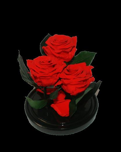 три красные розы в колбе
