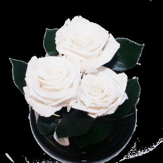 белая роза в колбе купить киев