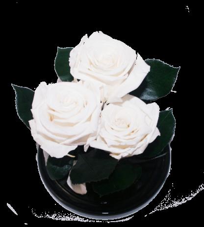 три белые розы в колбе