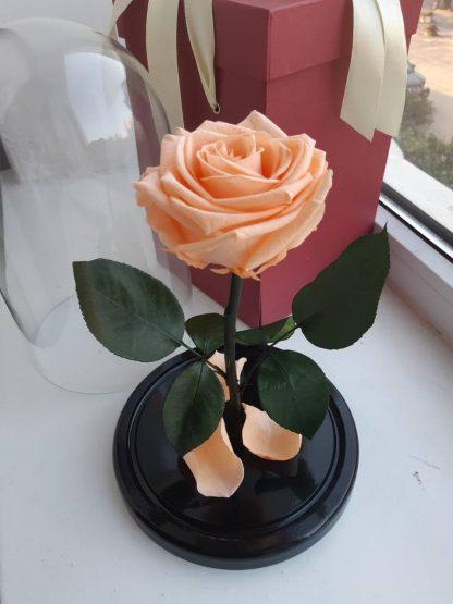 троянда у колбі купити київ україна