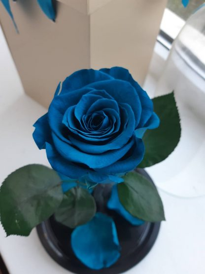 роза под стеклом киев