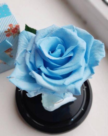 вічна троянда у колбі