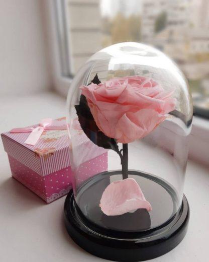 розовая вечная роза в колбе купить киев украина