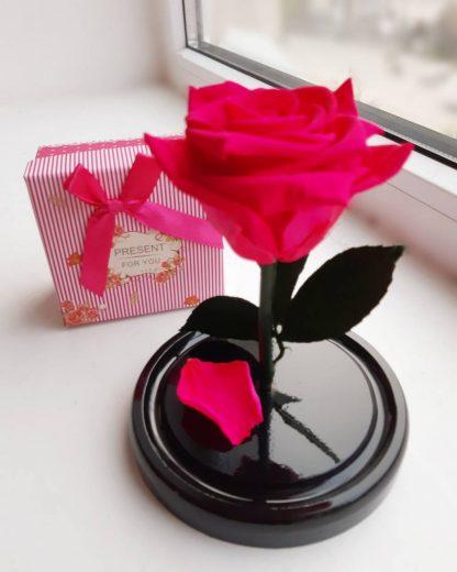 вічна троянда у колбі рожева