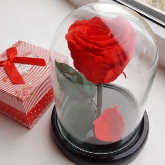 вечная роза в колбе купить Киев Украина
