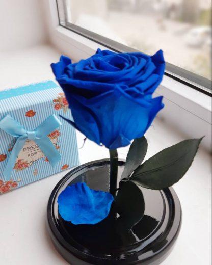 синяя роза в колбе купить киев украина