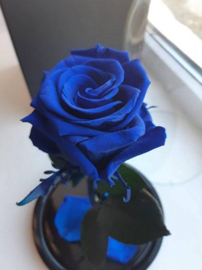 роза под куполом купить киев