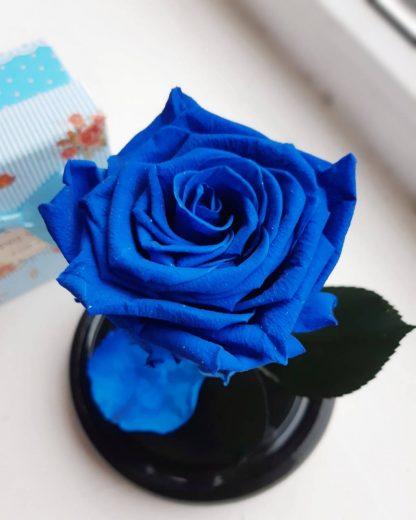 синя роза у колбі