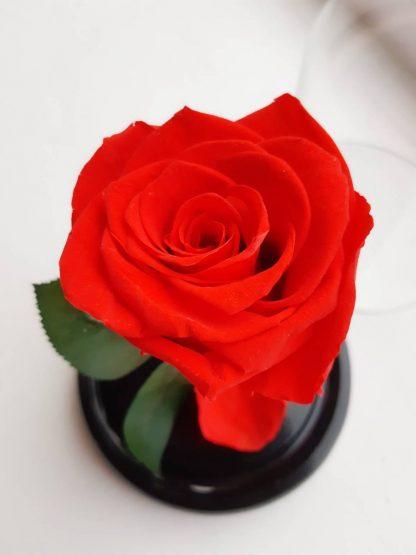 червона роза в колбі