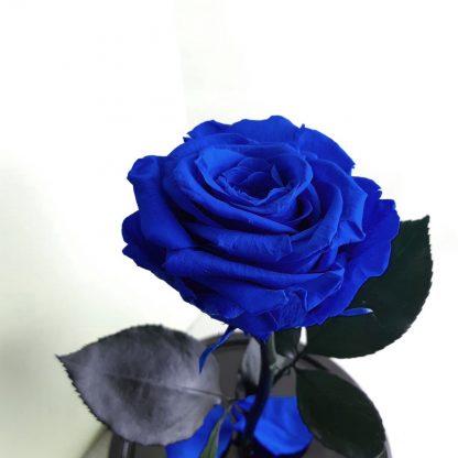 подарок на день рождения синяя вечная роза в колбе