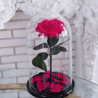 малиновая роза в колбе подарок девушке